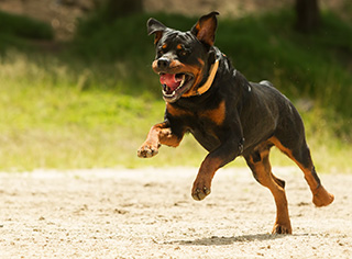 dog-bite-accidents